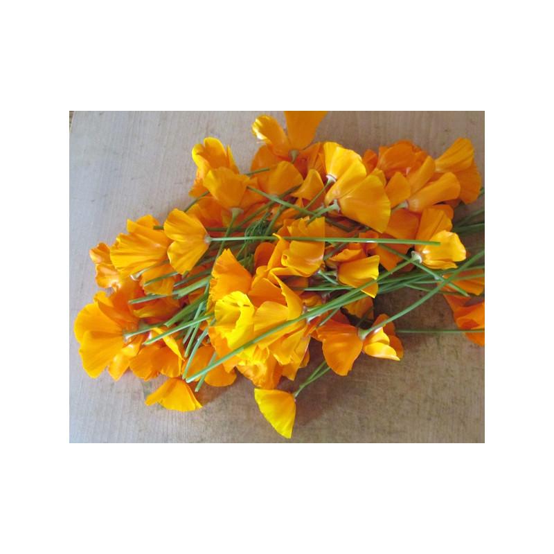 Bouquet de Pavot de Californie frais